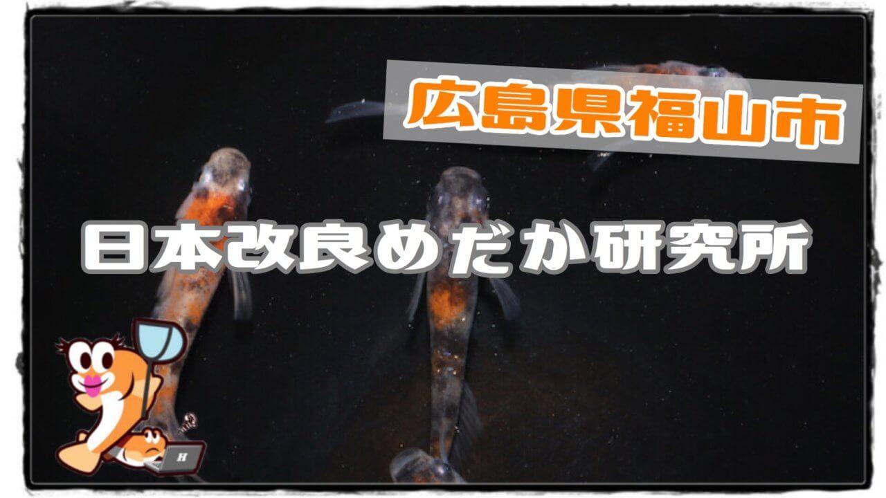 日本改良メダカ研究所(メダカ屋さんのアイキャッチ)