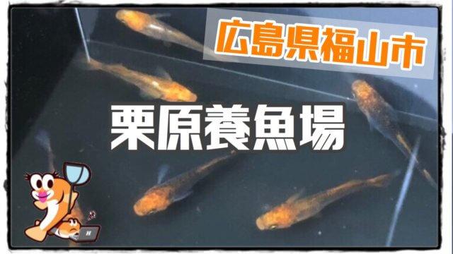 栗原養魚場のアイキャッチ