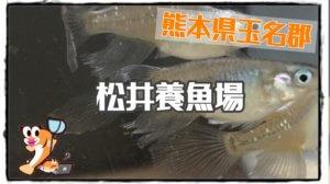 松井養魚場のアイキャッチ