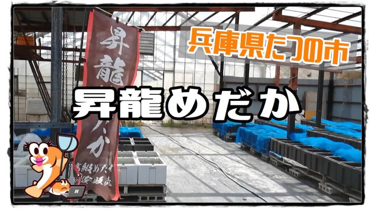 兵庫県のメダカ屋さん昇龍めだかのアイキャッチ