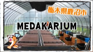 MEDAKARIUMのアイキャッチ