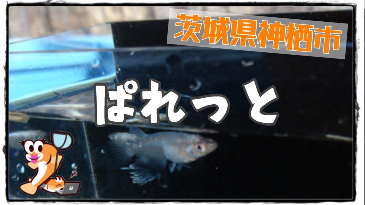 メダカ屋ぱれっとのアイキャッチ