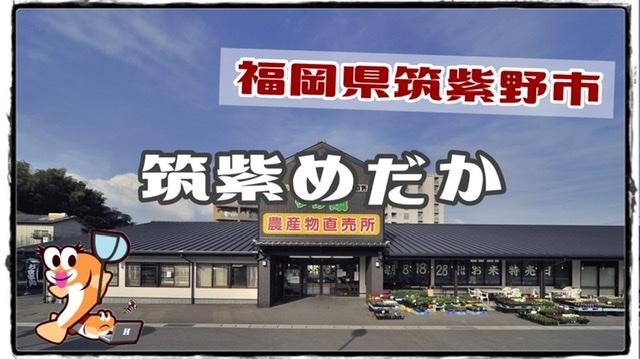 福岡県のメダカ販売店、筑後めだかのアイキャッチ
