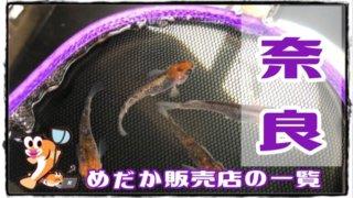 奈良県のメダカ販売店のアイキャッチ