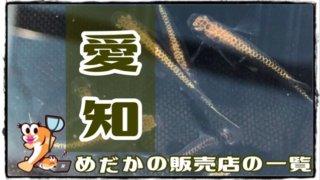 愛知県のアイキャッチ