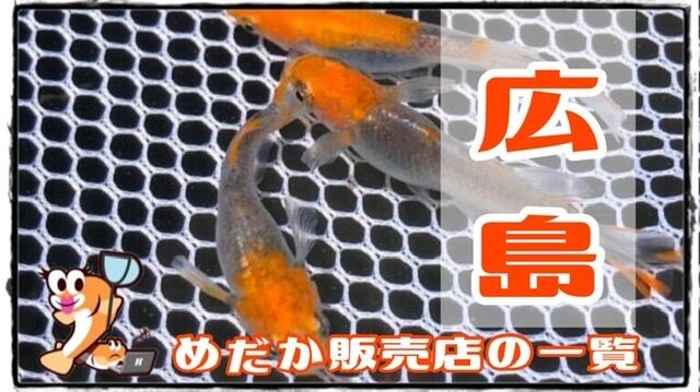 広島県のメダカ販売店のアイキャッチ