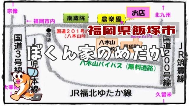 福岡県のメダカ販売店のアイキャッチ