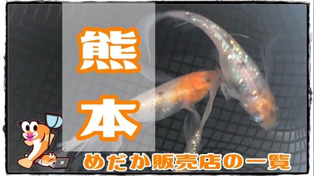 熊本県のメダカ販売店のアイキャッチ