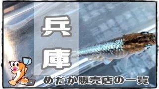 兵庫県のメダカ販売店のアイキャッチ