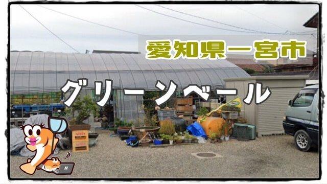 愛知県のメダカ販売店のアイキャッチ
