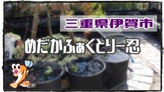 三重県のメダカ販売店のアイキャッチ