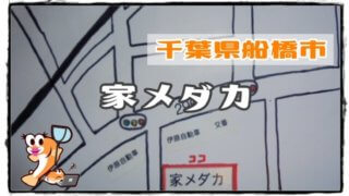 千葉県のメダカ販売店のアイキャッチ