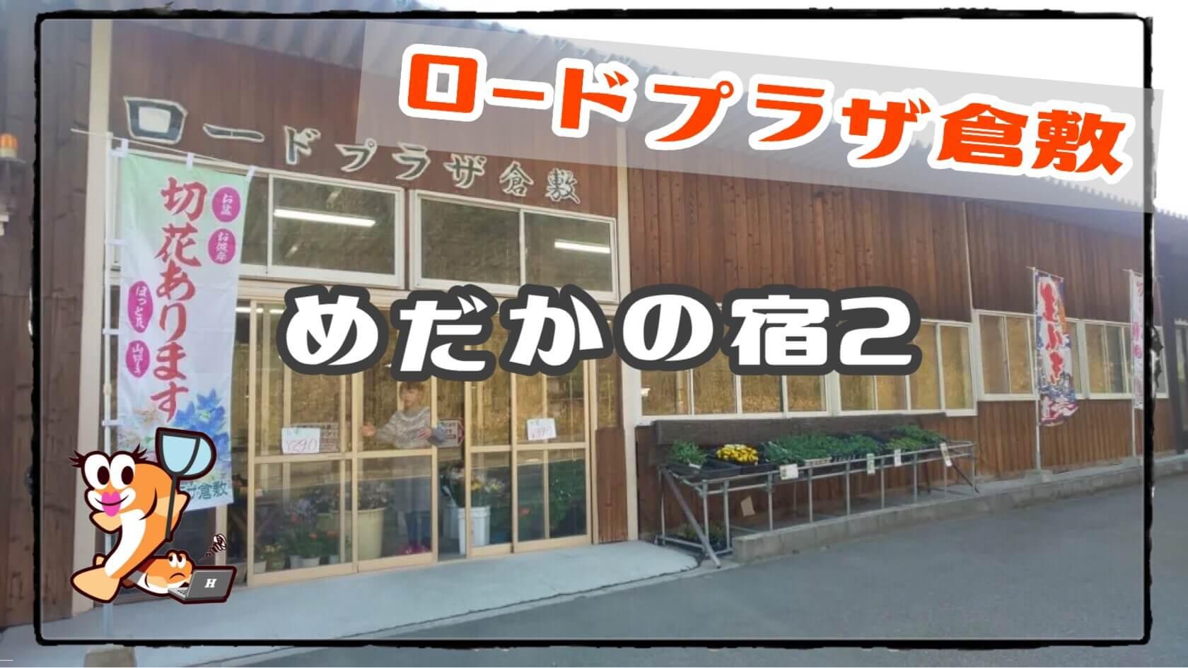 岡山県のメダカ販売店のアイキャッチ