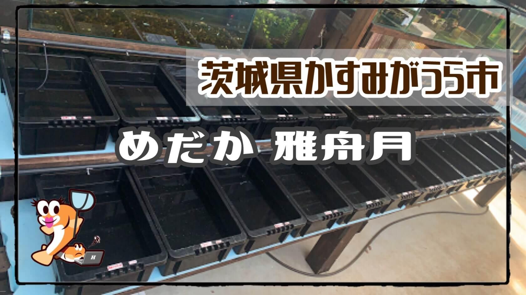 茨城県のメダカ販売店のアイキャッチ