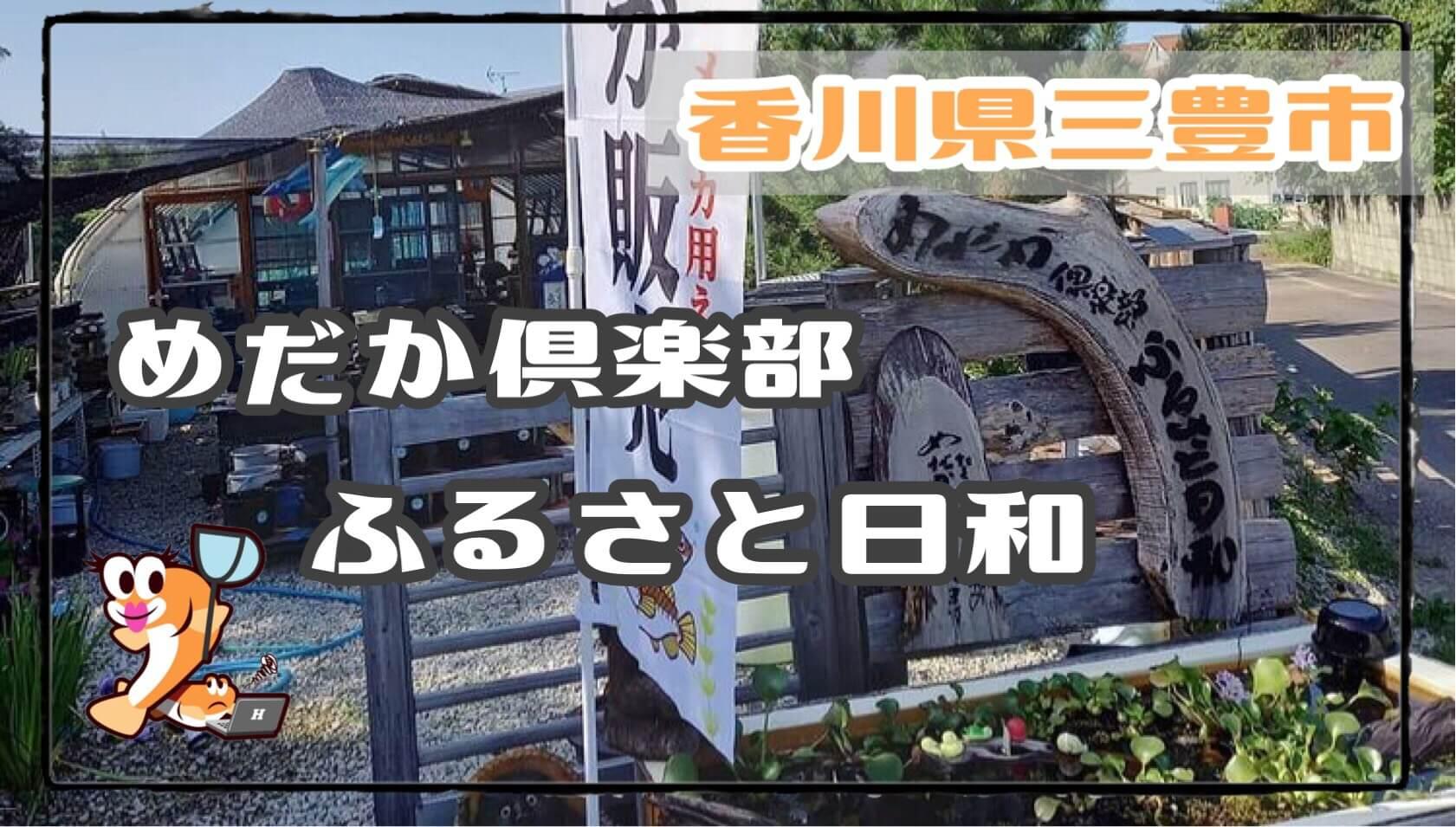 香川県のメダカ販売店のアイキャッチ