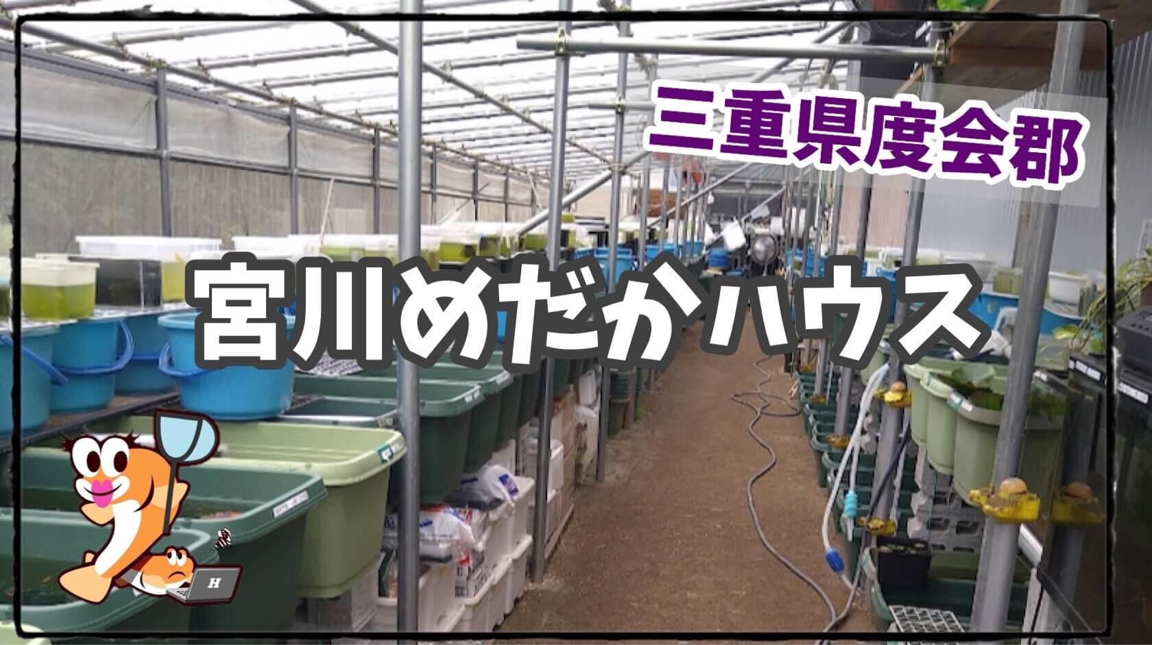 宮川メダカハウスのアイキャッチ