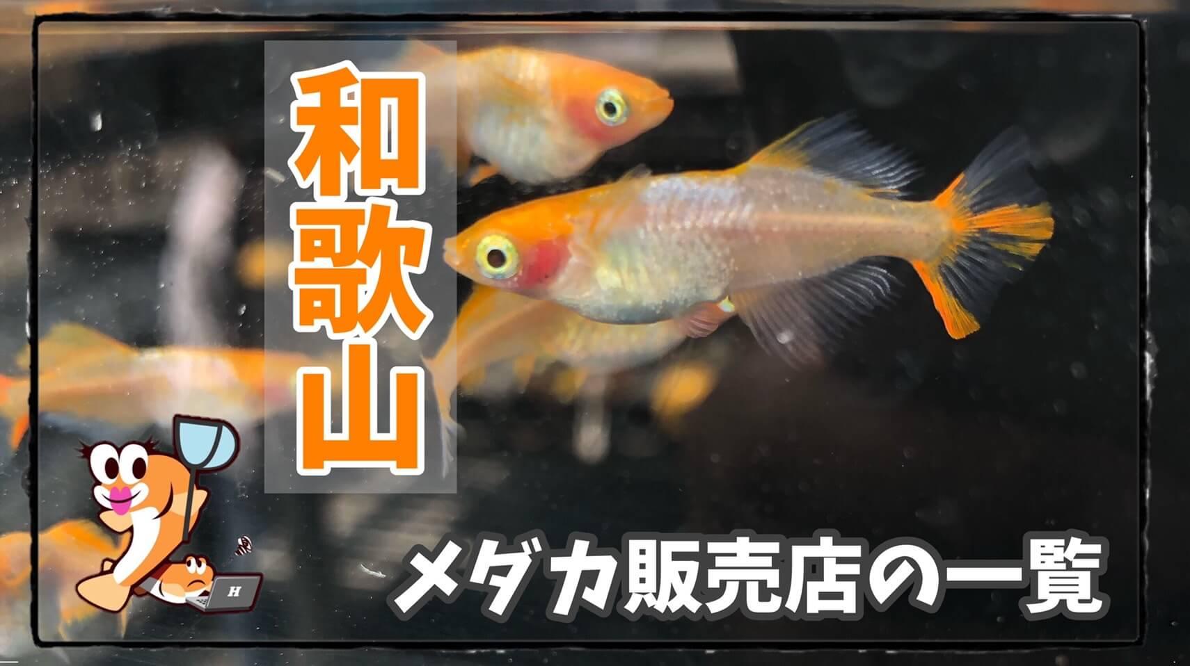 和歌山県のメダカ屋さんののアイキャッチ